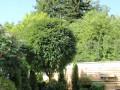 Оформяне на дървета и храсти