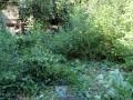 Премахване на дървесно-храстова растителност