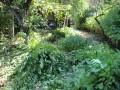 Резитба и премахване на дървесно-храстова растителност
