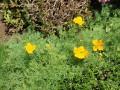 Цветна растителност