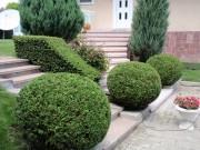 Оформяне на декоративна растителност
